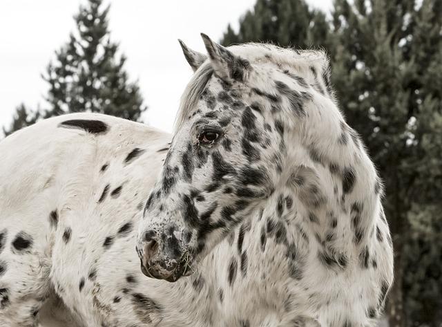horse-423010_640