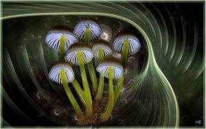 mushrooms-695742_640